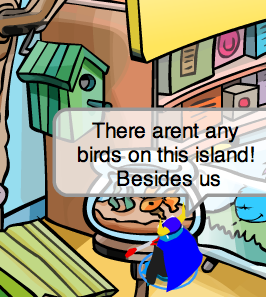 no-birds.png